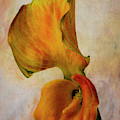 Calla Lily And Its Leaf by Garry Gay
