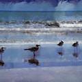 Calming Seagulls by Trish Tritz