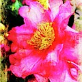 Camellia Pinks by Alice Gipson