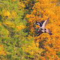 Canada Geese In The Fall by Sharon Talson