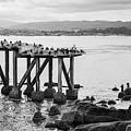 Cannery Row Monterey Ca I Bw by David Gordon