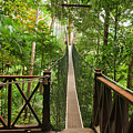 Canopy Walkway. Taman Negara National by Elena Odareeva