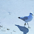 Cape May Seagull Shadow by JAMART Photography