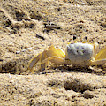 Carl The Crab by Lora J Wilson