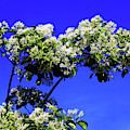 Carly's Tree - The Sky's The Limit by Rick Locke