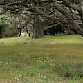 Carmel Meadow 2 by Marie Leslie