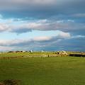 Carnmenellis Landscape by Terri Waters