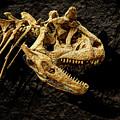 Carnotaurus Skull 2 by Weston Westmoreland