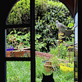 Cat Looking Out The Window by Tatiana Travelways