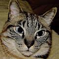 Cat - Sweet - Boy by D Hackett