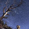 Catalinas Starry Night by Chance Kafka