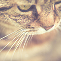 Cats Whiskers by Ly Wylde Photography