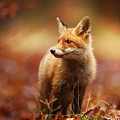Cautious Fox Stopped At The Edge Of The by Michal Ninger
