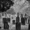 Cemetery In The Pines Bw by Kristia Adams