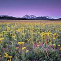 Central Idaho Color by Leland D Howard