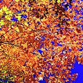 Central Park Fall Colors New York City by John Rizzuto
