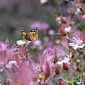 Chasing Butterflies by Susan Warren
