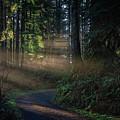 Chasing Light by Bill Posner