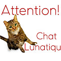 Chat Lunatique Number 2 by Endre Balogh