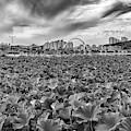 Cheonhoji Pond In Black And White by Rick Berk