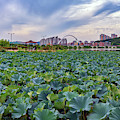 Cheonhoji Pond by Rick Berk
