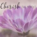 Cherish This Moment by Teresa Wilson