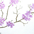 Cherry Blossoms by Marsha McAlexander
