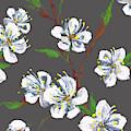 Cherry Blossoms On Gray Floral Impressionism by Irina Sztukowski