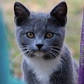 Chester Cat by Buddy Scott