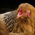Chicken Portrait by Jean Noren