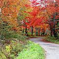 Chikanishing Road In Fall by Debbie Oppermann