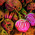 Chioggia Beets by Garry Gay