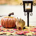 Chipmunk In The Autumn by Melissa Stanton