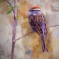 Chipping Sparrow Portrait by Bellesouth Studio