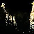 Christmas At The Living Desert Zoo - Giraffe Family by Colleen Cornelius