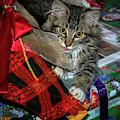 Christmas Cat by Jean Noren
