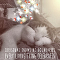 Christmas Nap Quote by JAMART Photography