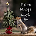 Christmas Squirrel Most Wonderful Time Of The Year Square by Terry DeLuco