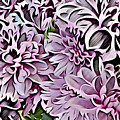 Chrysanthemum Abstract. by Trudee Hunter