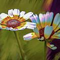 Chrysanthemum Carinatum #i9 by Leif Sohlman