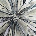 chrysanthemum I by Shadia Derbyshire