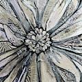 Chrysanthemum by Shadia Derbyshire