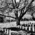 Arlington Civil War Honored Dead by Paul W Faust - Impressions of Light