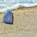 Clamshell On The Beach At Assateague Island by Bill Swartwout Photography