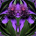 Clematis 5 by Buddy Scott