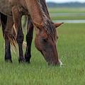 Close U P Of Horse Eating by Dan Friend
