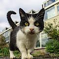 Close Up Cat On The Street by Raymond De la Croix