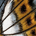 Close-up Of A Wing Of A Butterfly by Torbjorn Arvidson