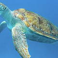 Close Up Sea Turtle by Mark Hunter