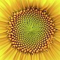 Closeup Of A Sunflower by Ilona Nagy